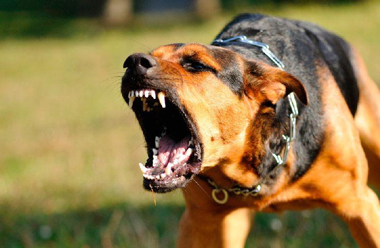 Photo of Mujer murió atacada por cuatro perros en Quito