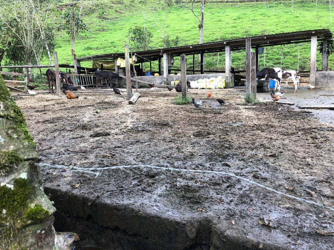 Photo of Descargas ganaderas se evidenciaron en el río Lelia