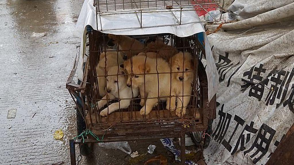Photo of China pone fin a la cría de perros en granjas