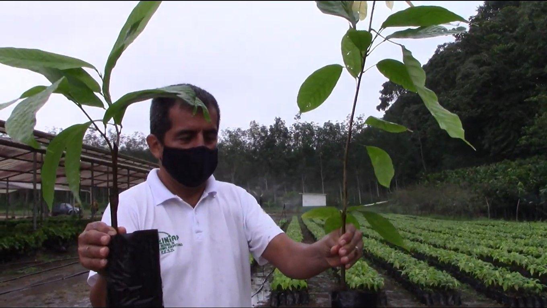 Photo of Iniap capacita a agricultores de cacao